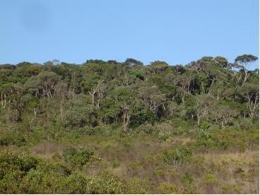 A aprovação permite a derrubada de 16,1 mil km² da Mata. Foto: Rubens C. Mota - Instituto de Ciências Biológicas da UFMG